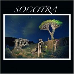 Socotra Yemen 2009